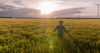 Farmer Wheat Field Ambitious Windmill Sunlight Landscape Nature Agriculture Growth Footage Man Sky Renewable Energy